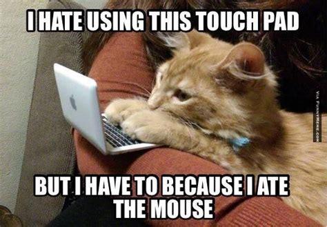 Mouse Memes - cat memes google search meow meow meo grrrrrrrrrr