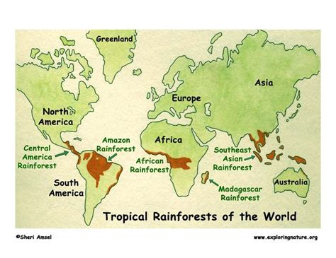 all tropical rainforests animals search results insectanatomy 335 best images about visual english on pinterest