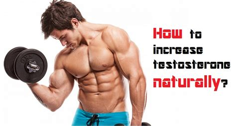 healthy fats increase testosterone testosterone boosting tips the honest fitness