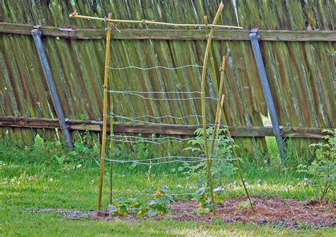 Bamboo Trellis Diy Cucumber Trellis Cage Free