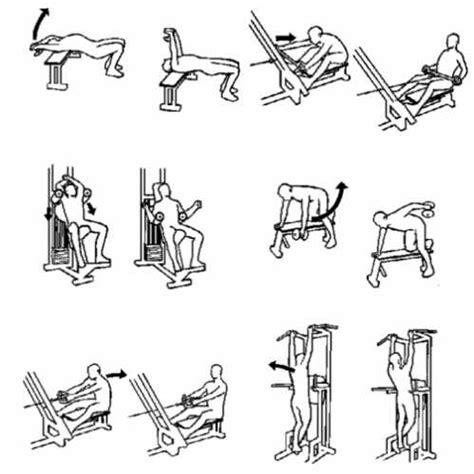 esercizi per dorsali a casa dorsali sopravvivere net