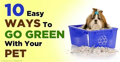 tipsheet easy ways to go green green at home 10 simple tips to go green with your pet