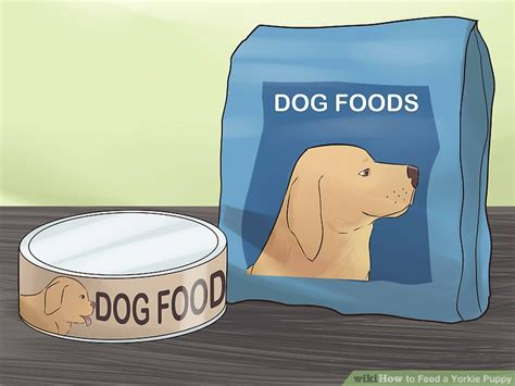 yorkie picky eater how to feed a yorkie puppy 11 steps with pictures wikihow