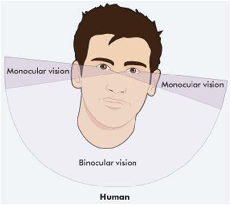 vision monocular monocular vision