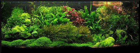 Aquascape Ada by Aq Ada Singapore Aquascaping Contest 2010 Tank Photos