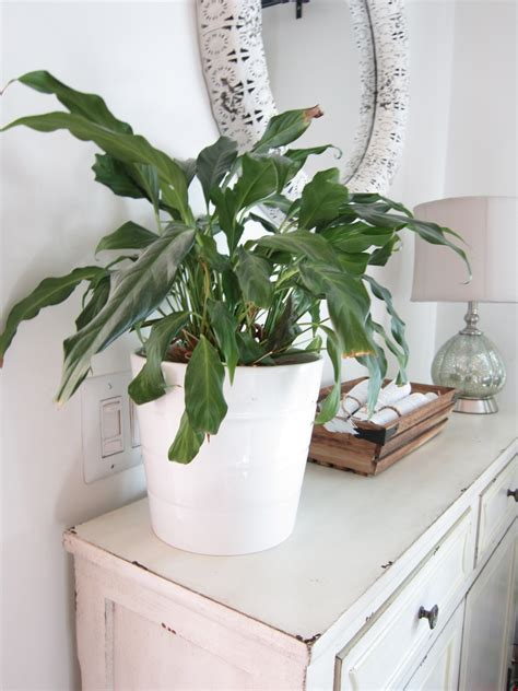 best house plants the 10 best air purifying house plants the honeycomb home