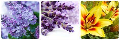 significato fiore lilium significato dei fiori mamma felice