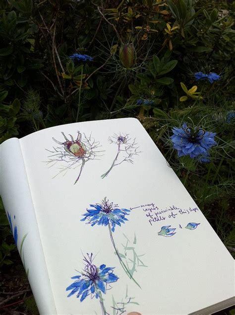 sketchbook nature nature sketchbook retreat for writers readers