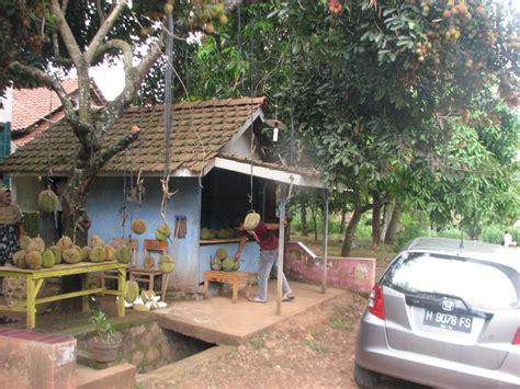 panoramio photo  pohon rambutan berbuah durian