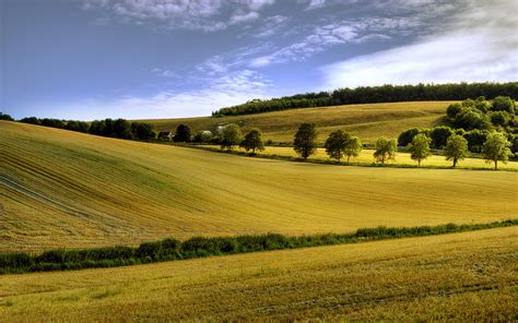 Yellow Landscape Pictures Fondo De Pantalla Yellow Summer Field Landscape Hd