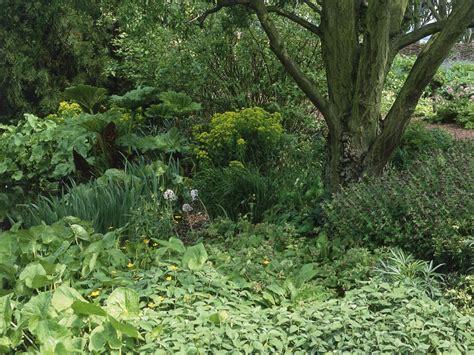 shade garden ideas hgtv