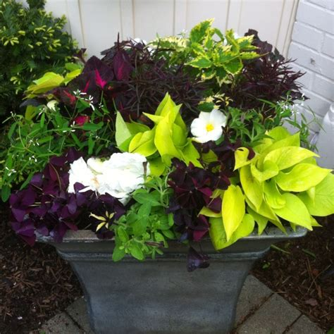 container gardens for shade shade container