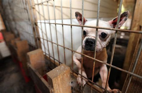 puppy mills in ga 16 states named in 100 worst puppy mill breeders in the united states iheartdogs