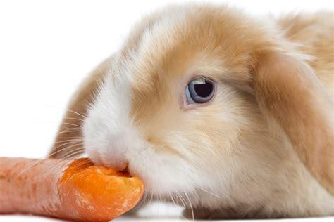 One Day Blind Do Rabbits Have Good Eyesight Wonderopolis