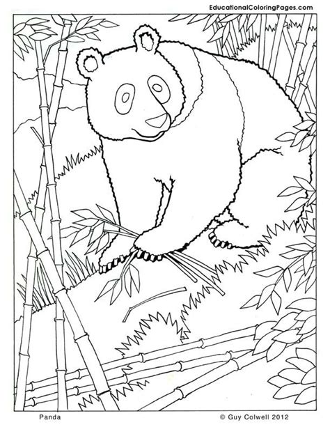 zoo coloring pages for adults 11 best mammals coloring pages images on pinterest
