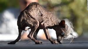 How To Take Care Of A Blind Dog Meet The World S Ugliest Dog Cnn Com
