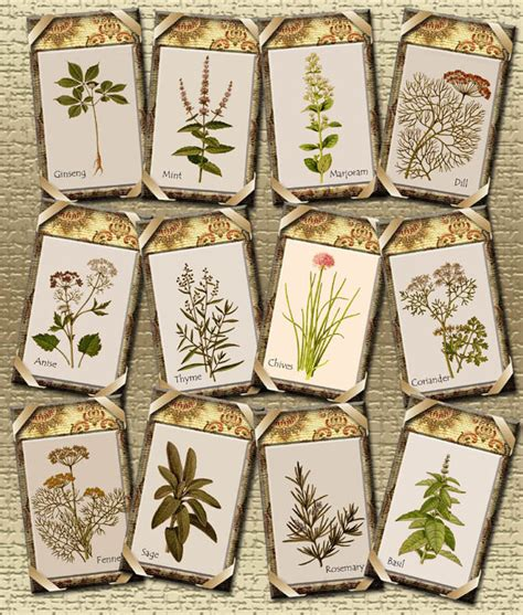 printable herb labels 5 best images of free printable herb labels herb garden