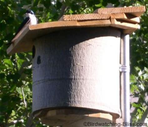 swallow bird house plans tree swallow birdhouse plans image mag