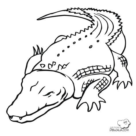 imagenes animales acuaticos y terrestres feroz cocodrilo dibujalia dibujos para colorear