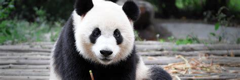 www panda zoo berlin herzlich willkommen im zoo berlin panda