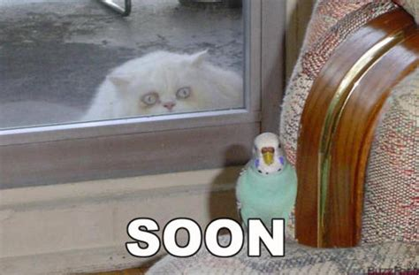Meme Soon - soon know your meme
