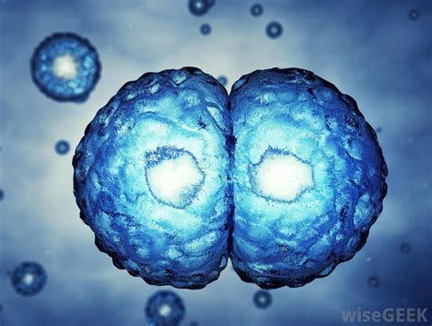 Cell Nex what are the different types of human cells with pictures
