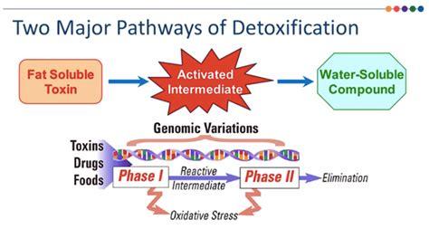 Vitamin B6 Overdose Detox by Doctor Go Go Go Go