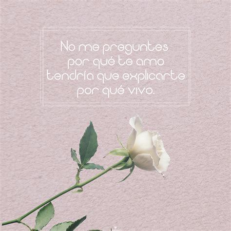 imágenes de buenos días la más hermosa 7 im 225 genes de rosas blancas hermosas con frases de amor