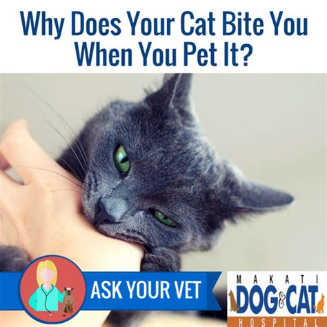 why does a your why does your cat bite you when you pet it