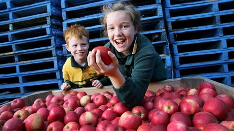 Good Sam Monthly Giveaway - great apple giveaway lifts focus on kids health the courier mail