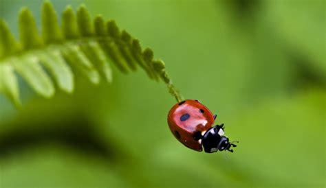 imagenes tiernas hd mariquitas insecto tiernas hd taringa