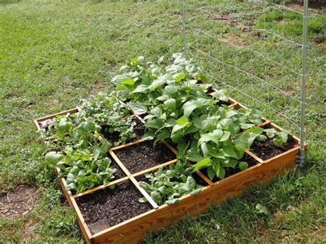 Small Veg Garden Ideas Small Square Foot Backyard Vegetable Garden House Design With Wire Trellis And Wood Raised Bed Ideas