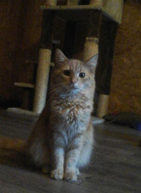 katze suchen ein zuhause tiere suchen ein zuhause katzen