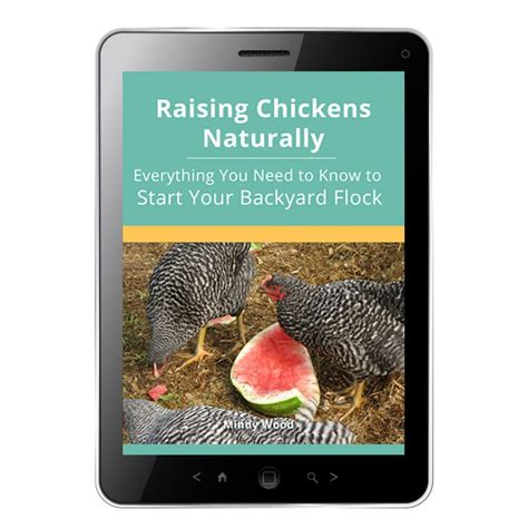 backyard poultry naturally raising chickens naturally everything you need to know