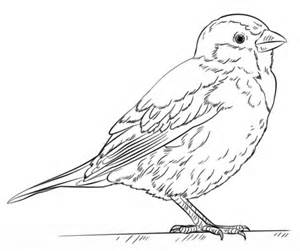 Sparrow Printable Coloring Pages Sparrow Coloring Pages