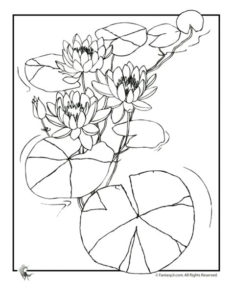 coloring page lily flower lily flower tattoo coloring coloring pages
