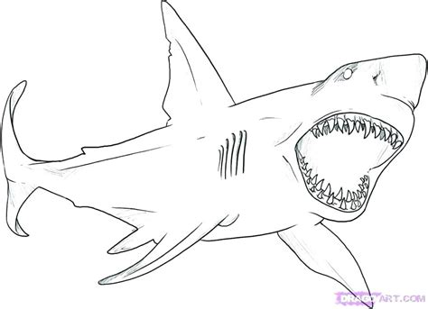 shark coloring pages games shark for coloring coloring shark whale coloring pages