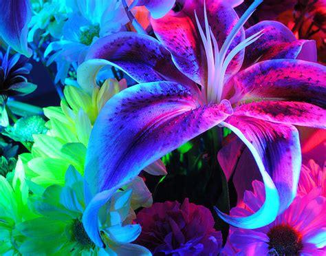 pretty plants beautiful flowers flowers photo 33623976 fanpop