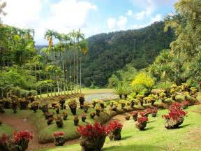 panoramio photo of jardin de balata martinique