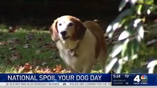 national spoil your day national spoil your day august 10 national today
