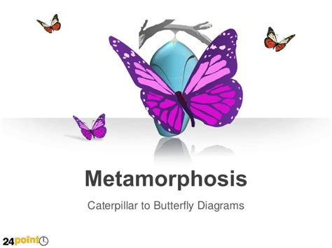 emotional butterfly the metamorphosis and the lessons learned books metamorphosis butterfly and caterpillar editable