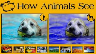 how many colors can dogs see 10 exles of how animals see images that show us the