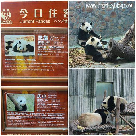 Oleh Oleh Berbentuk Gantungan Kunci Tibet wisata santai ke rumah panda di chengdu