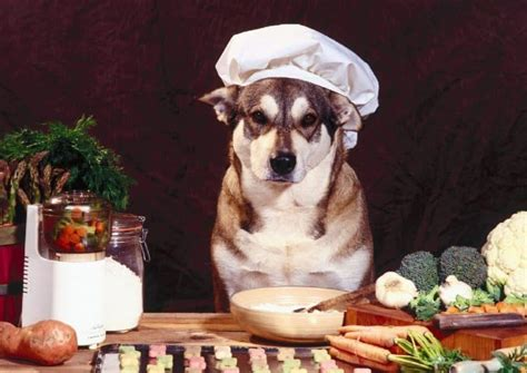 best food for huskies best food for huskies what to choose and why