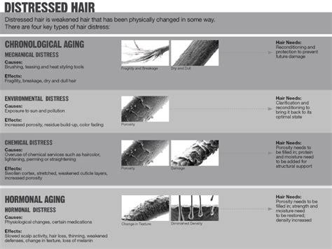 Types Of Damaged Hair by 10 Different Ways To Stop Your Hair From Shedding