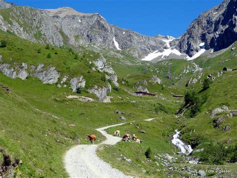 urlaub österreich alm schmiedler alm 2 085 m venedigergruppe osttirol