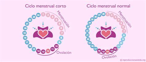 Calendario De Ovulacion Para Quedar Embarazada Menstruaci 243 N Y Ovulaci 243 N Pr 243 Ximas En Ciclos Cortos