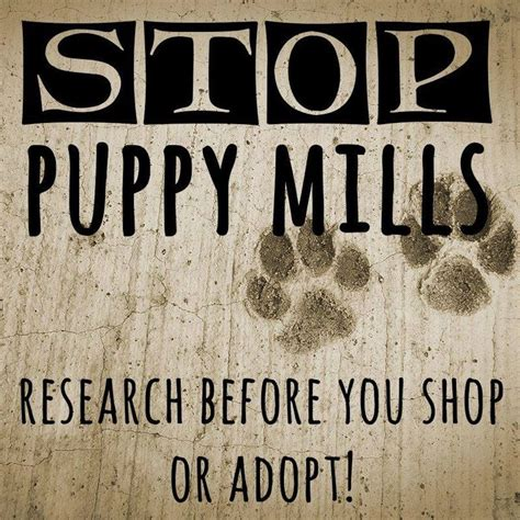 stop puppy mills stop puppy mills stop the barbaric acts of cruelty
