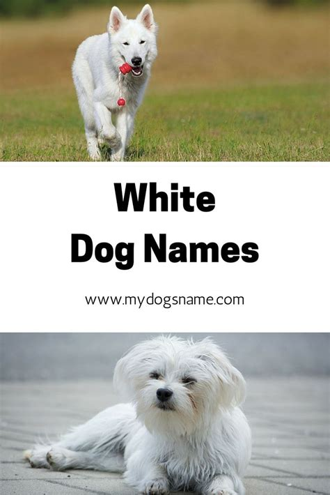 names for white dogs 26 best images about names on supplies and best food brands