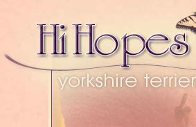 hihopes yorkies hihopes terriers